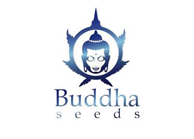 Banco semillas marihuana - Buddha Seeds
